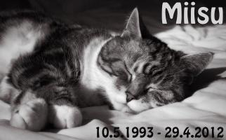 kuva 194100 . Miisu [HCS fs 09 22] naaras 10.5.1993 - 29.4.2012 . 28.4.2012