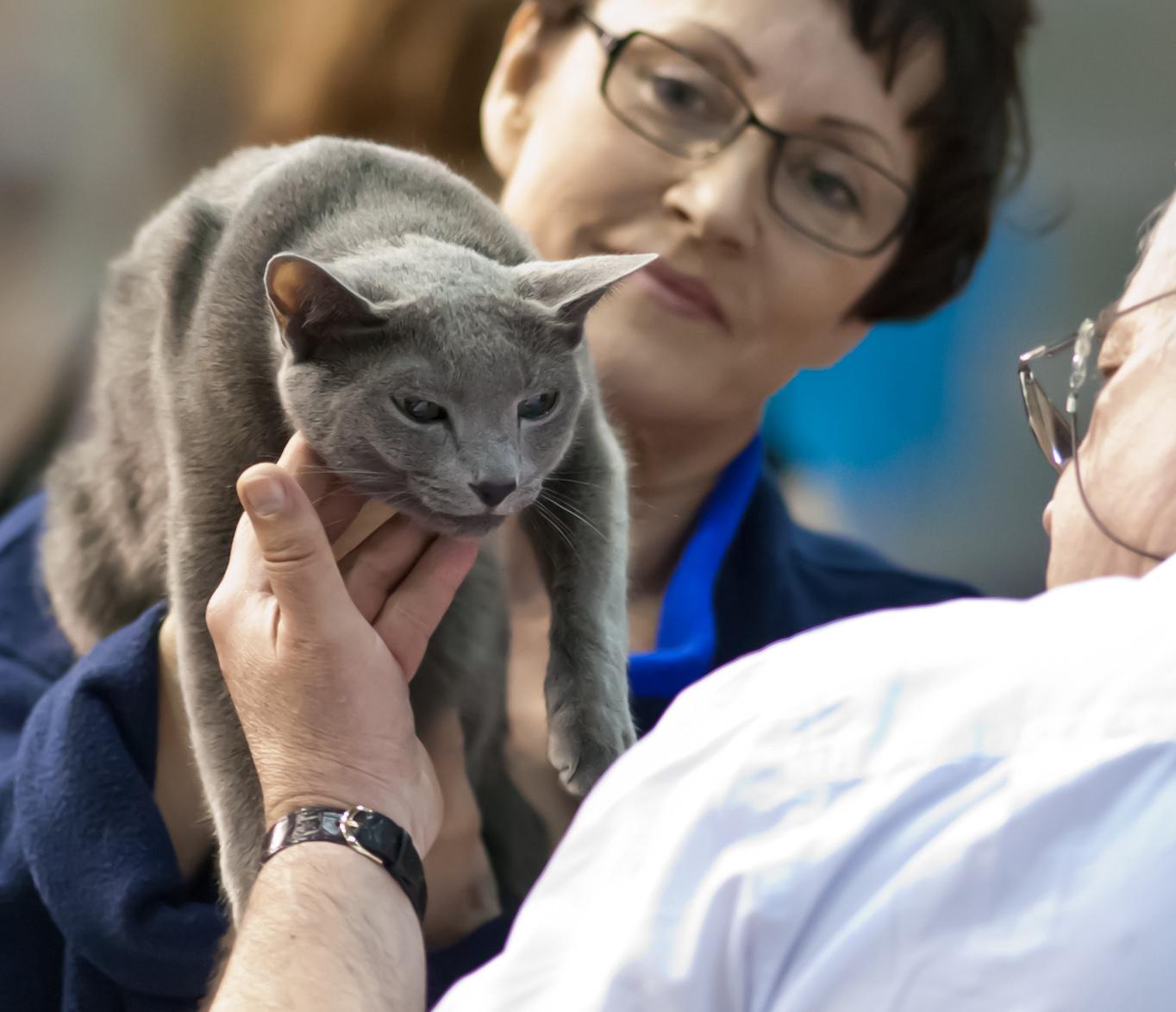 [RUS], kuva 195056, 19.5.2012