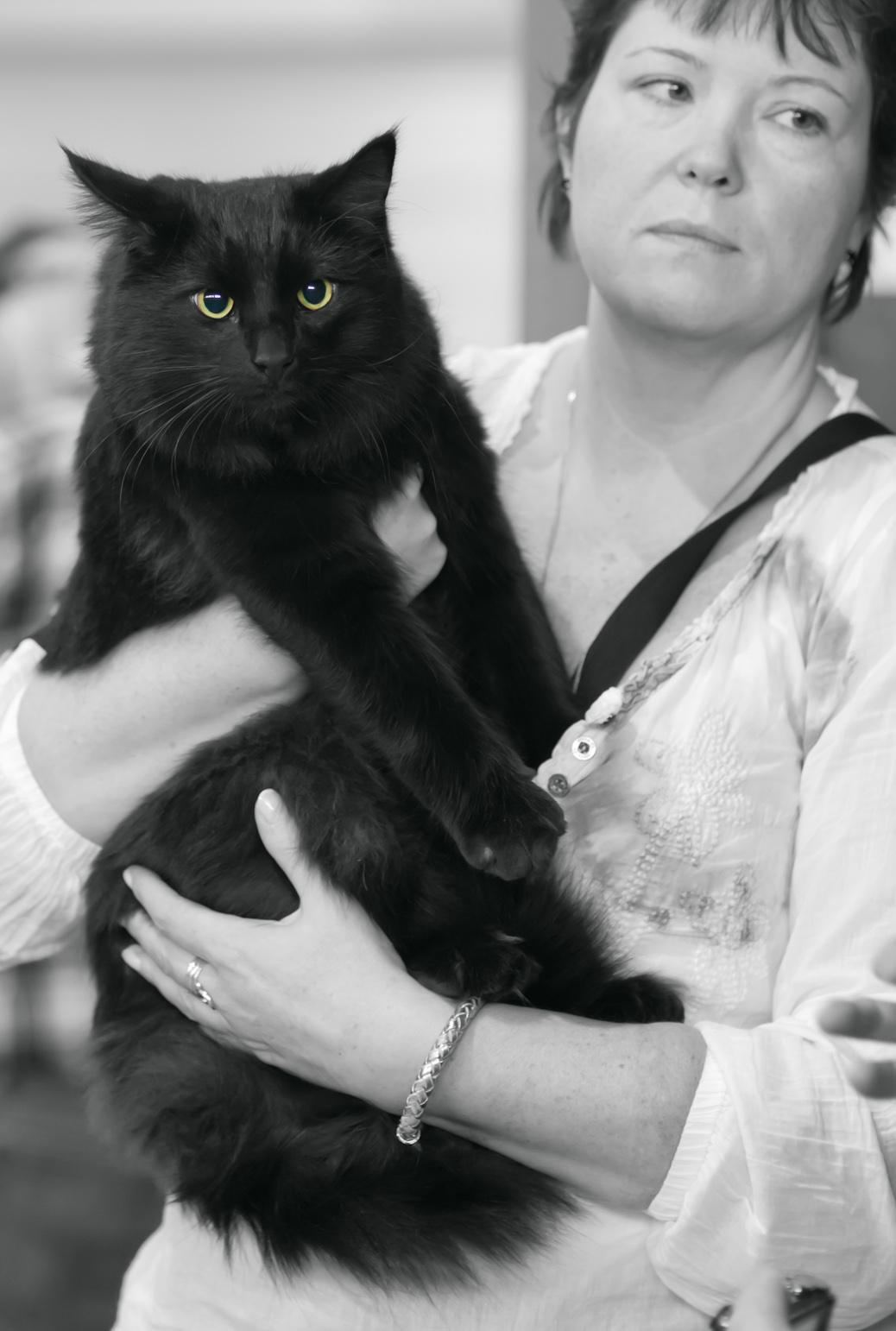 IC SE*Miss Mikkus' Il Divo [NFO n], photo 198042, 2012-10-07
