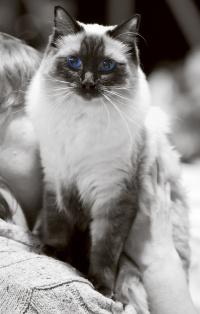 photo 199005 . PR Lukanpuron Brenda (Pipsa) [RAG n] . 2012-11-03