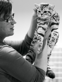 photo 199119 . Ice Cat Laureen Chérie*CZ [BRI ns 24 64] . 2012-11-03