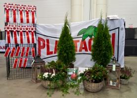 kuva 200149 . Plantagen ja ruusukkeita . 11.11.2012