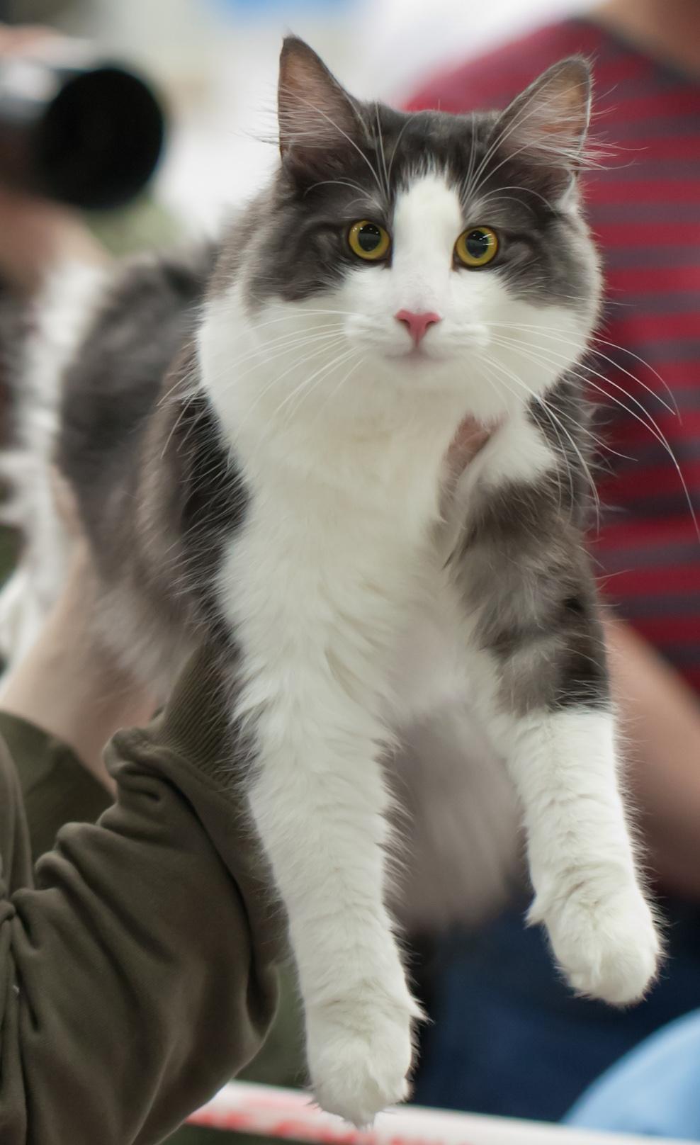 Cat'omatic Snöhetta [NFO ns 03], photo 201062, 2012-11-25
