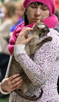 photo 202034 . Sweetpurr's Jane Marple (Pulina) [CRX n 33] . 2012-12-29