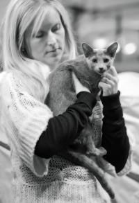 photo 202055 . Shady-Lady's Fairlane [RUS] . 2012-12-29
