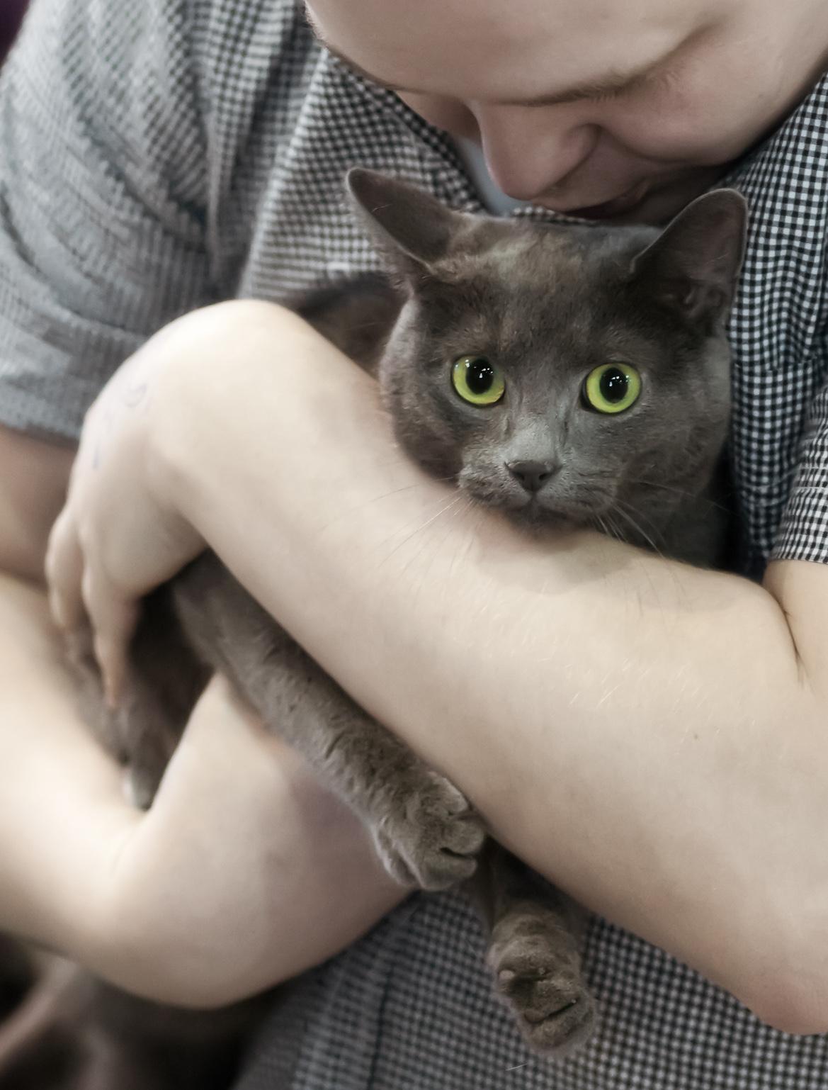 Pikku-Kissa [HCS], kuva 208130, 25.5.2013