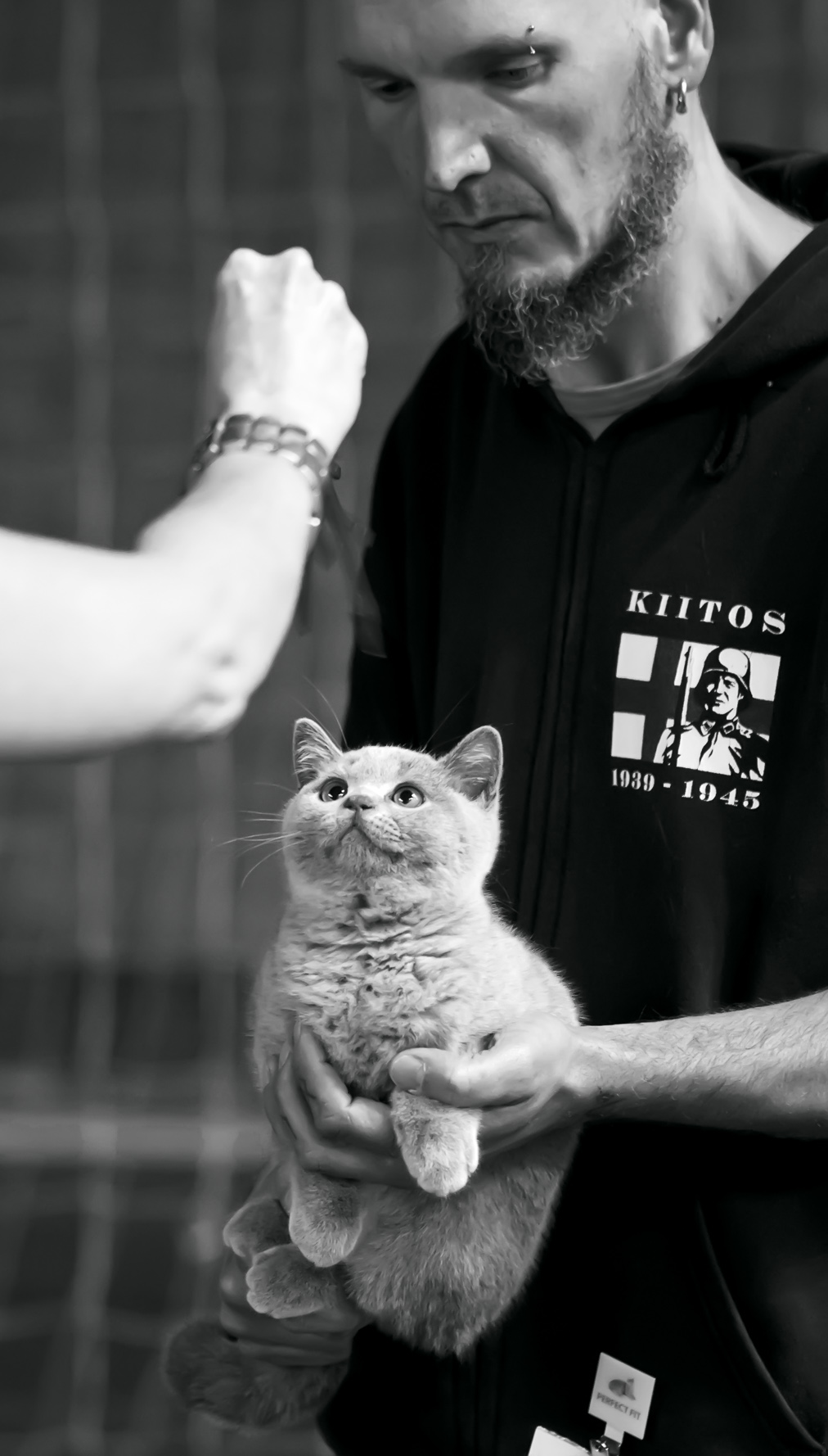 Rhinestone's Angus Young [BRI a], kuva 211033, 24.8.2013