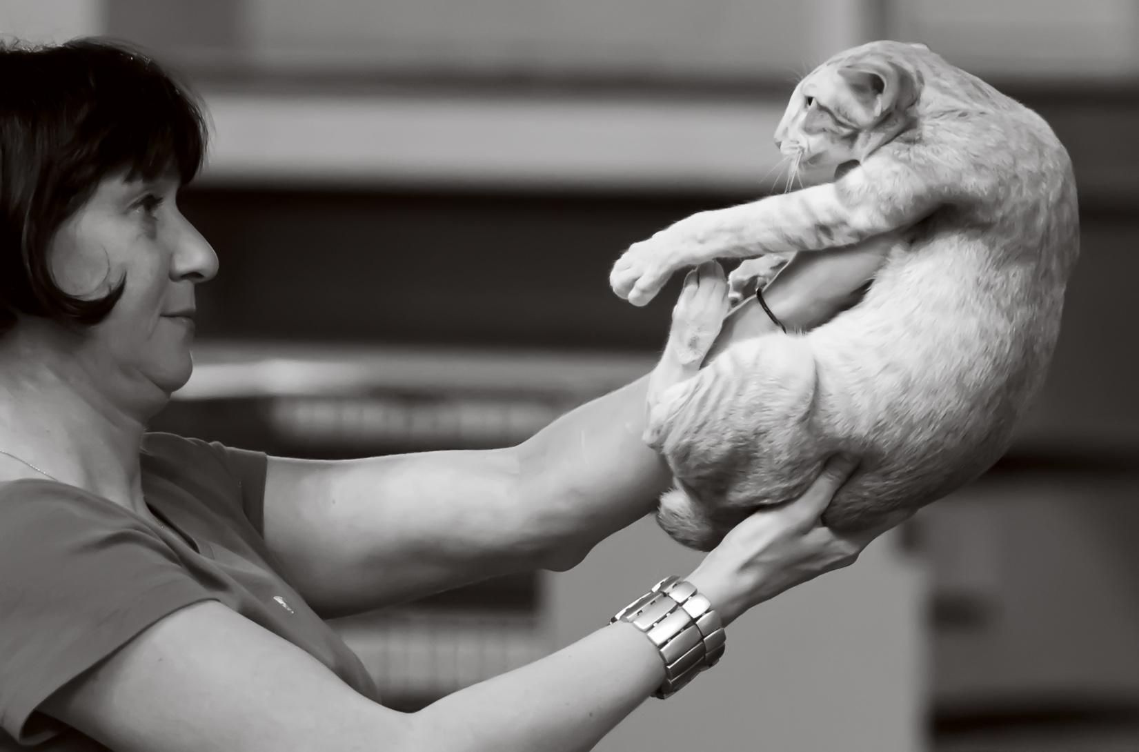 HU*Shagio-Chen Legolas for Keskimaan (Lee) [OSH d 24], kuva 211225, 24.8.2013