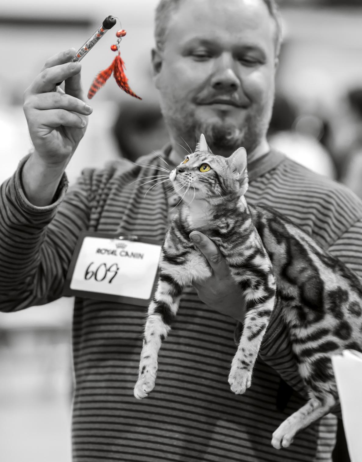 Leopardette's A Piece of Puzzle [BEN n 22], photo 212015, 2013-09-07