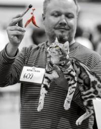 photo 212015 . Leopardette's A Piece of Puzzle [BEN n 22] . 2013-09-07