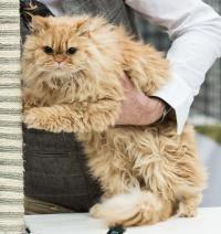 photo 214028 . SGCA Flodo Cats Alejandro [SRL d 22] . 2013-11-23