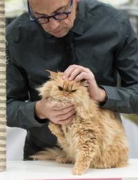 kuva 215095 . SGCA Flodo Cats Alejandro [SRL d 22] . 24.11.2013