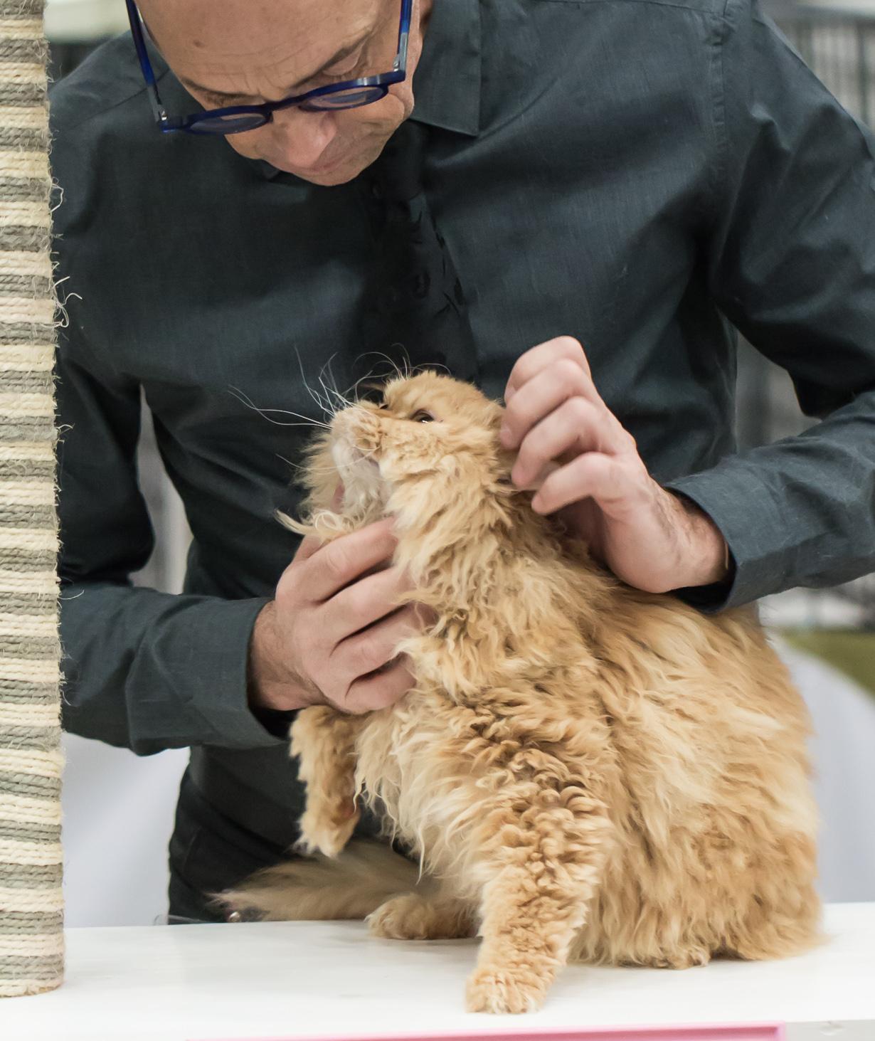 SGCA Flodo Cats Alejandro [SRL d 22], kuva 215097, 24.11.2013
