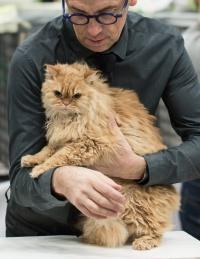 kuva 215098 . SGCA Flodo Cats Alejandro [SRL d 22] . 24.11.2013