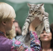 photo 216042 . Artsycats Lucy in the Sky [MCO ns 09 22] . 2013-12-28