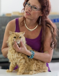 photo 223012 . SGCA Flodo Cats Alejandro [SRL d 22] . 2014-07-12