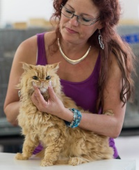 photo 223013 . SGCA Flodo Cats Alejandro [SRL d 22] . 2014-07-12