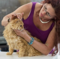 photo 223015 . SGCA Flodo Cats Alejandro [SRL d 22] . 2014-07-12