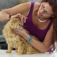 photo 223016 . SGCA Flodo Cats Alejandro [SRL d 22] . 2014-07-12