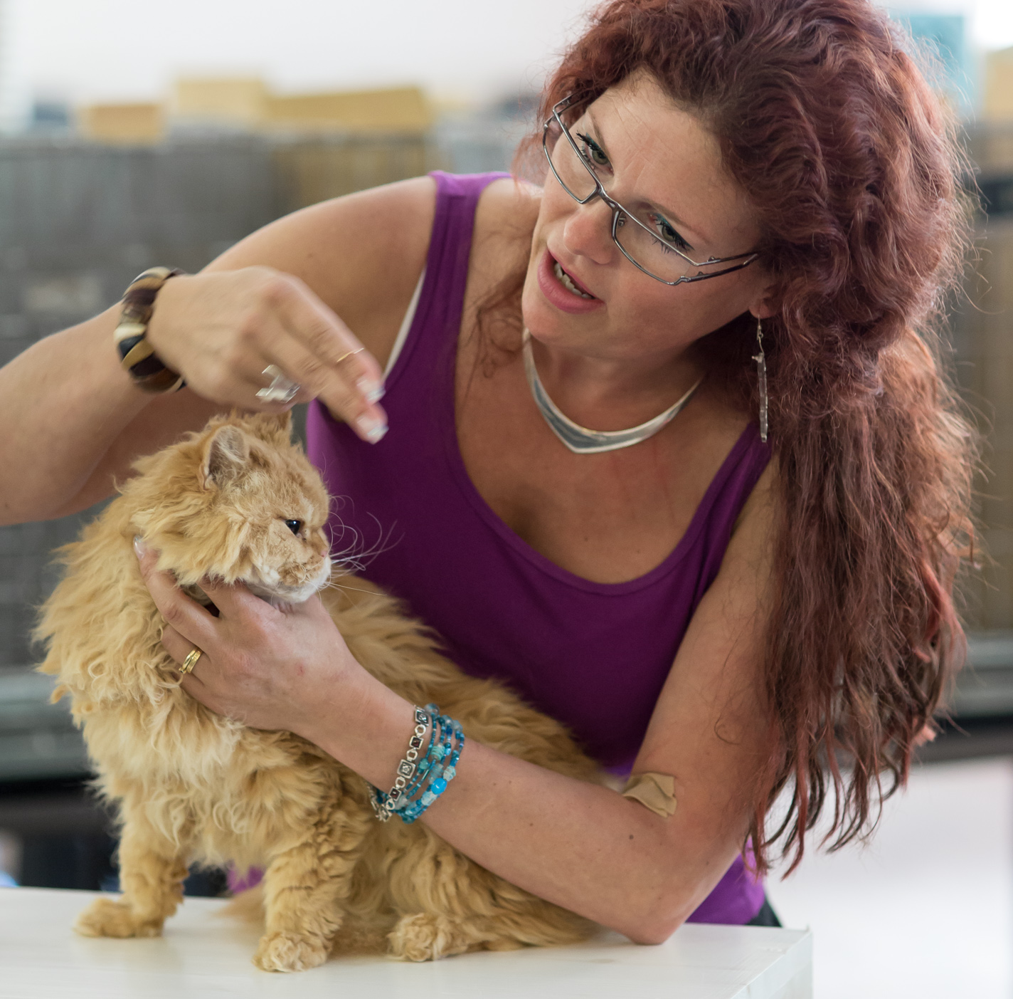 SGCA Flodo Cats Alejandro [SRL d 22], kuva 223017, 12.7.2014