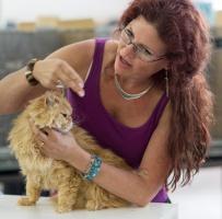 photo 223017 . SGCA Flodo Cats Alejandro [SRL d 22] . 2014-07-12