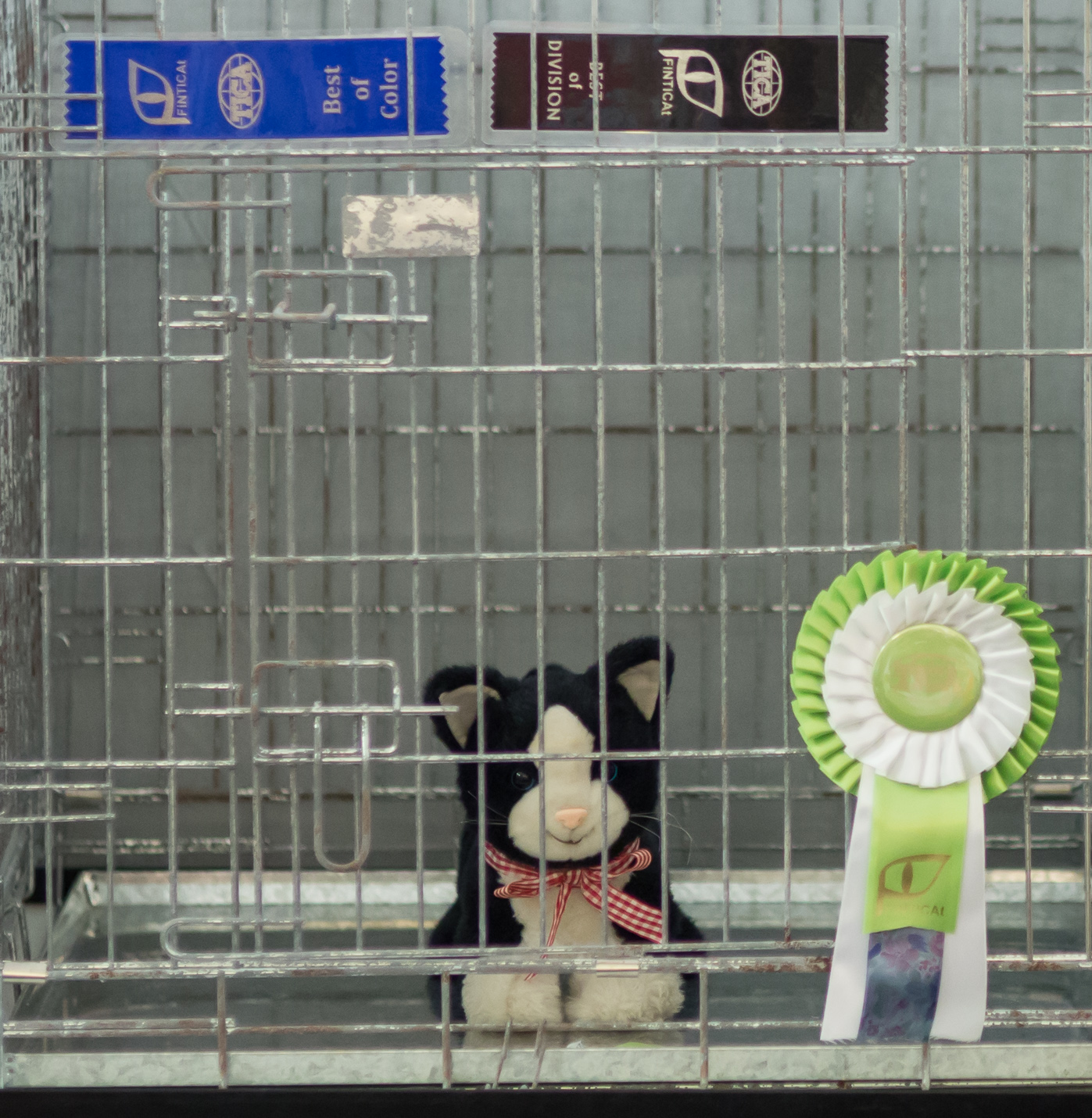 the toy cat contest, photo 223112, 2014-07-12