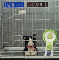 photo 223112 . the toy cat contest . 2014-07-12